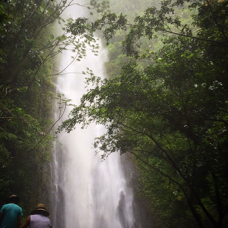 Waterfall Hikes on Oahu Manoa Falls