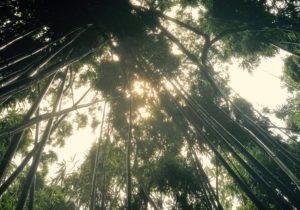 Manoa Falls Sky