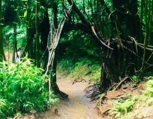 Manoa Falls Tree Arch