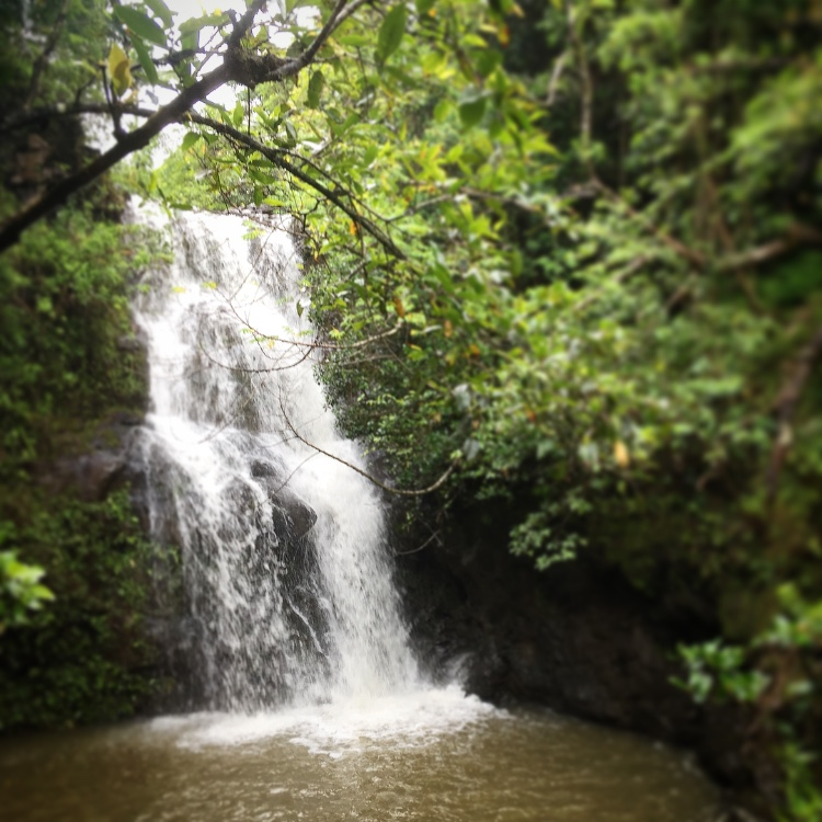 Oahu-Waterfall-Hikes-Opener