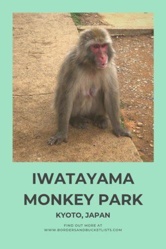 Iwatayama Monkey Park, Kyoto, Japan #arashiyama #kyoto #japan #monkeys #monkey #iwatayamamonkeypark