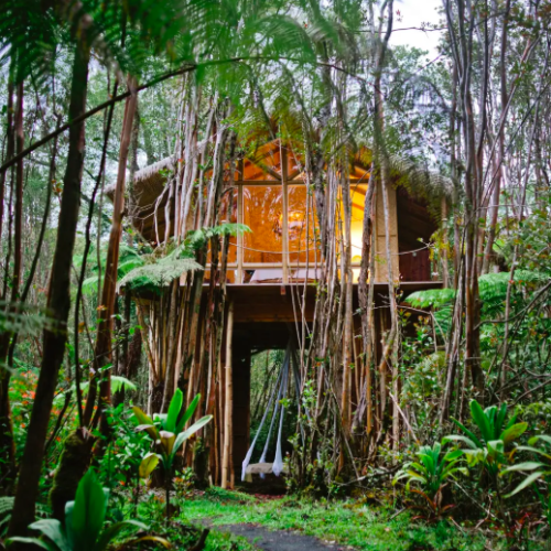 treehouse surrounded by Hawaiian plants Airbnbs in Hawaii