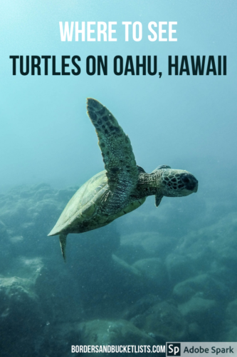 where to see turtles on oahu, where to see turtles in hawaii, where to see turtles on oahu hawaii, sea turtles oahu, turtles on oahu, turtles in hawaii, hawaii turtles, oahu turtles, swim with turtles oahu, swim with turtles hawaii