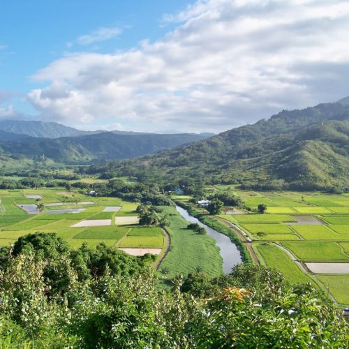 taro patches with green mountains in the background in Hanalei things to do on Kauai