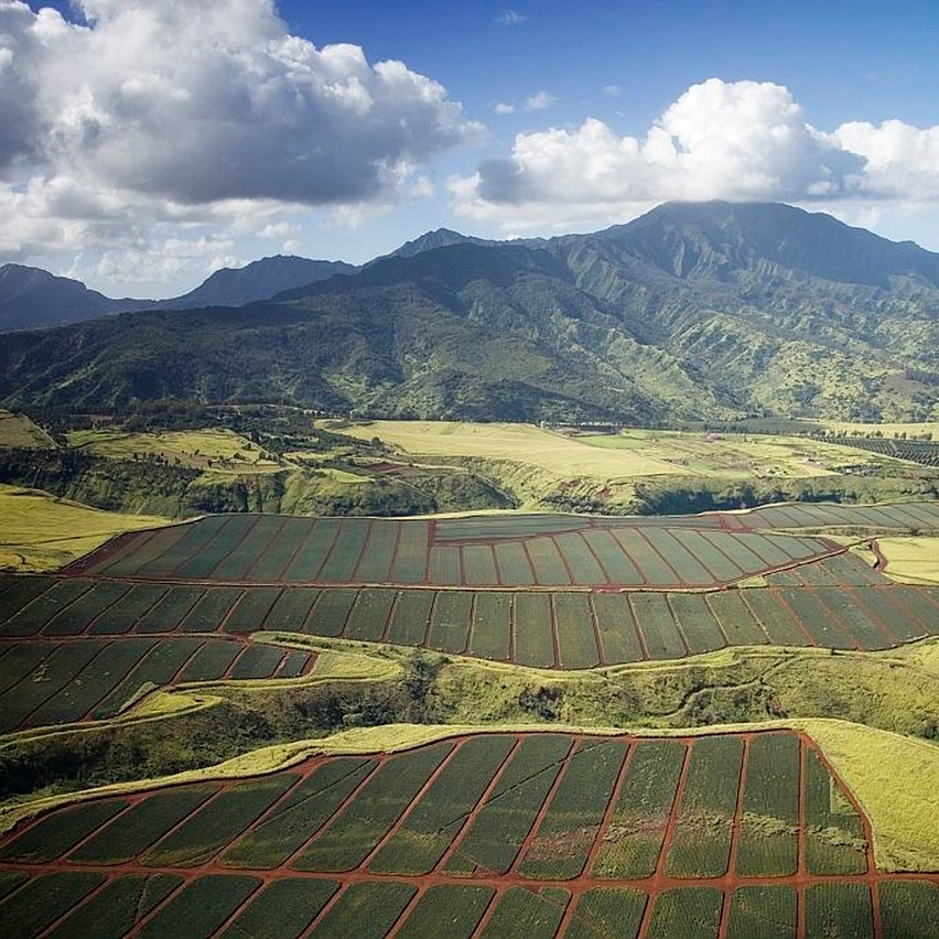 Hawaii pineapple fields with mountains in background