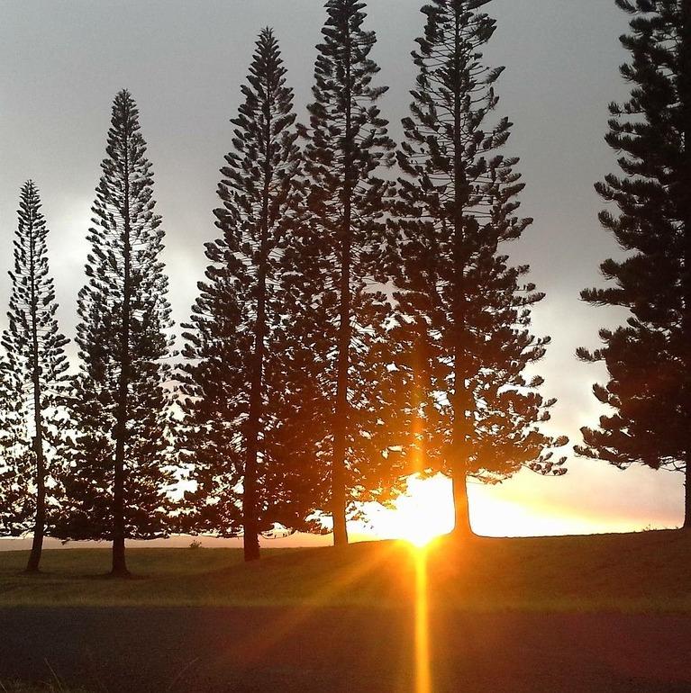 sunset shining through tall trees