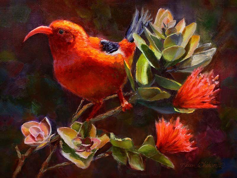 rare red Hawaiian bird perches on ohia lehua plant